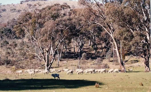 The Sheep Property