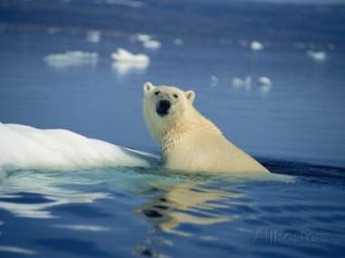 joe-stancampiano-polar-bear-wager-bay-northwest-territories-canada