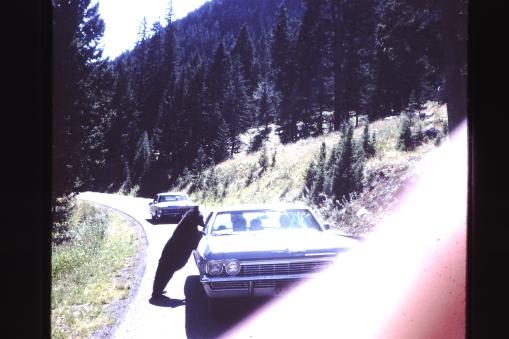 Bears would visit