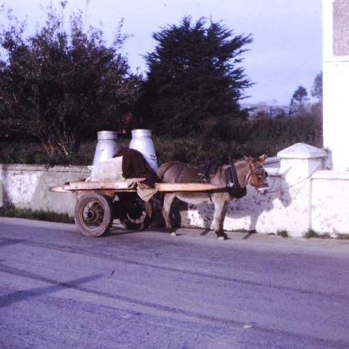 lady on a cart