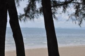 The sea breezes
