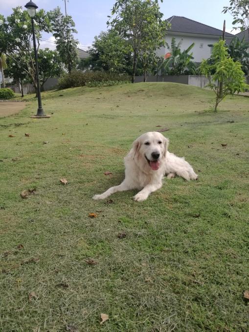 Lex resting after a run