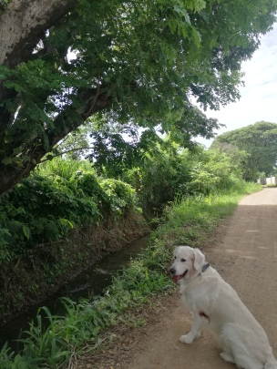 Happy walking