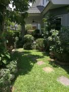 Garden greenery