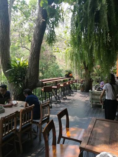 Wild Cafe Bush setting