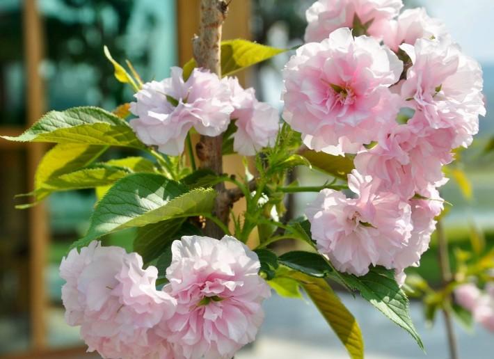 Nice blossoms